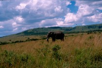 Maasai Mara Reserve